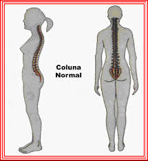 coluna normal
