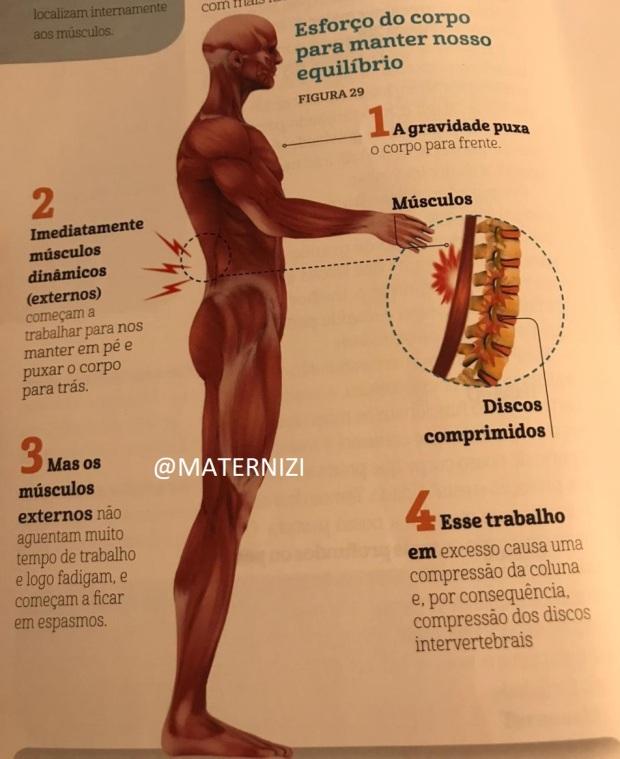 musculos afetados